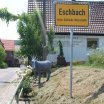 14.Esel in Eschbach